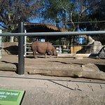 Hello, rhino!