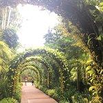 ภาพถ่ายของ สวนพฤกษชาติสิงคโปร์