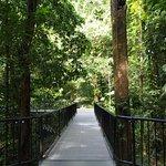 Walkways in Mossman Gorge