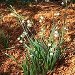The Blue Mountains Botanic Garden-bild