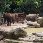 Elephants at Melbourne Zoo having a fun time outside