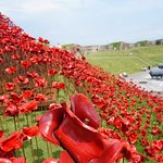 Poppy Wave @ Fort Nelson, See it before it's gone!