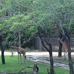 Disney's Animal Kingdom Lodge Φωτογραφία