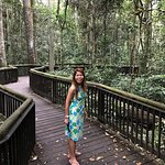 Me, boardwalk in Curtain Fig National Park