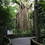Curtain Fig National Park