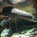 ภาพถ่ายของ Osaka Aquarium Kaiyukan