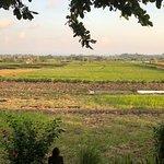 Sawah Bali Foto