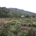 Lady Norwood Rose Garden, Wellington Botanic Garden