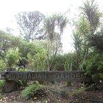 Aussie Garden, Wellington Botanic Garden