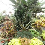Begonia House, Wellington Botanic Garden