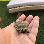 This little fella wanted to share a lounger by the pool.