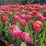 Foto Lauritzen Gardens Omaha's Botanical Center
