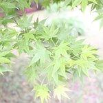 ภาพถ่ายของ Former Shiba Rikyu Gardens