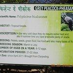 Inside Himalayan Nature Park