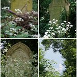Nunhead Cemetery: tombstones amongst the wild cow parsley, and a great view of St Paul's Cathedr