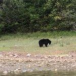 Adventure Tofino - Wildlife Tours Photo