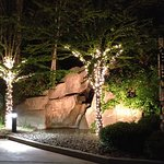 Beautiful tree light display at night.