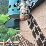 Cheyenne Mountain Zoo Photo