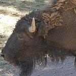 Bearizona Wildlife Park Φωτογραφία