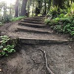 Steps to help you reach Pittock Mansion.
