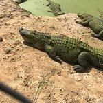 Gulf Coast Gator Ranch & Airboat Swamp Tours Φωτογραφία