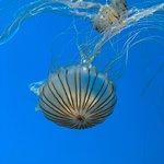Photo de National Aquarium