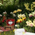 uno de los stands de la exposición de orquideas