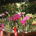 estas son algunas de las orquideas premiadas
