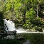Abrams Falls Trail Φωτογραφία
