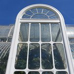 The magnificent Palm House
