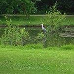 Reiger in het Vrijbroekpark
