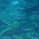 Delfin Schnorcheln