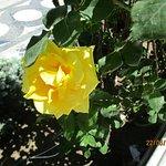 Розы, в парке Филармония