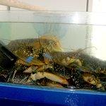 les homards