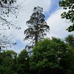 The very impressive redwood tree.