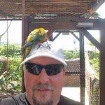 Bird Experience