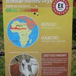 Sign for Scimitar Horned Oryx