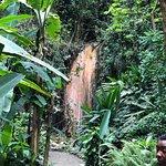 Diamond Waterfalls – fotografija
