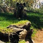 巴伦西亚生态动物园照片