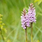 Orchids galore!