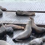 Pier 39 ภาพถ่าย