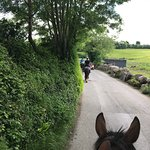 Cooper's Hill Equine Photo