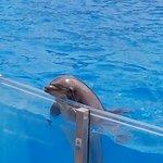 SeaWorld – fotografija