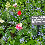 Lovely gardens and well labelled