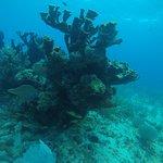 Arrecife Natural