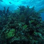 Arrecife Natural en Isla Mujeres