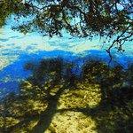Pine Walk