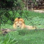 Lion....in its den