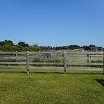 Ocracoke Pony Pens의 사진