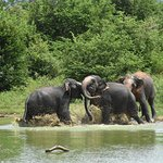 Udawalawe National Park ภาพถ่าย